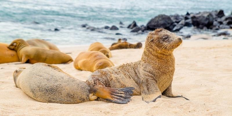 León marino bebé y madre playa carola en san Cristóbal Islas Galápagos ecuador